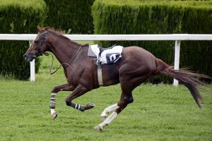 Horseback riding St. Augustine, FL