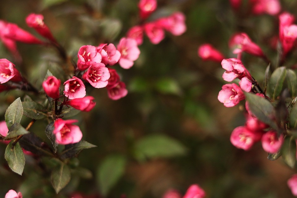 florida plant